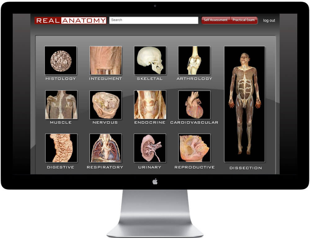 An iMac showing the RealAnatomy website layout with titles and images.